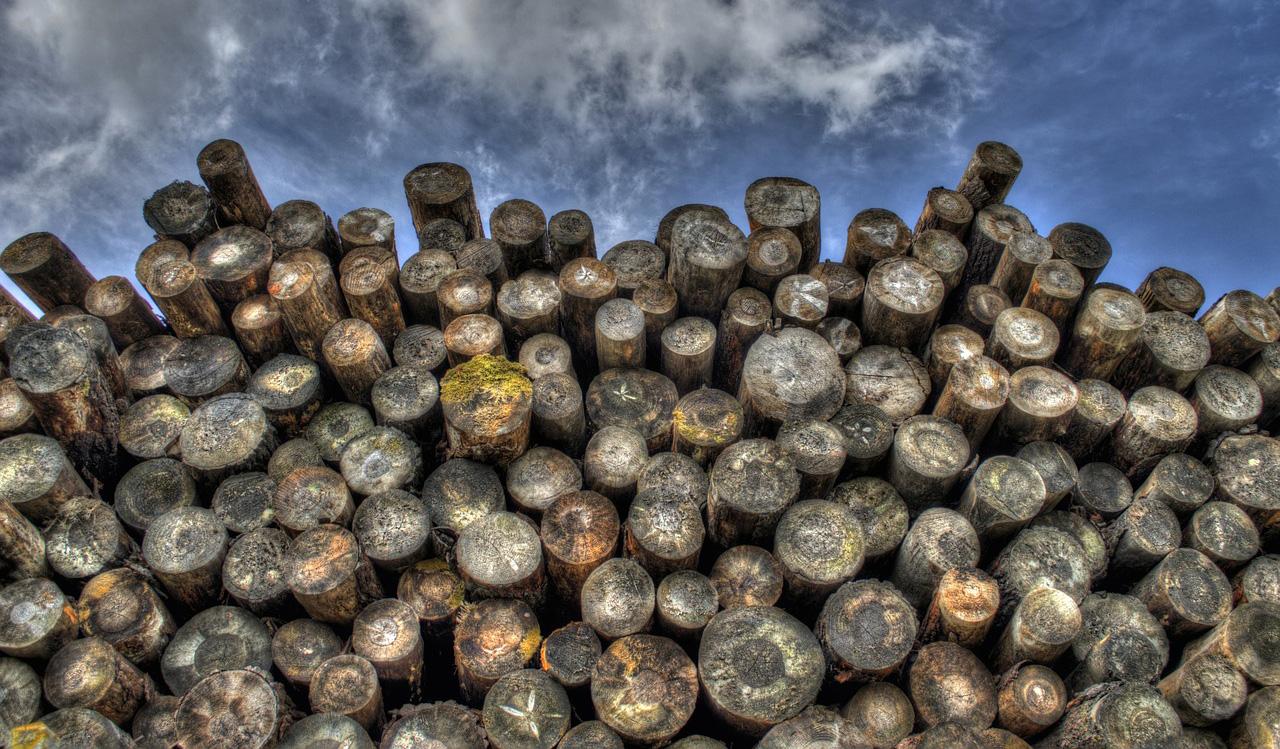 Baumstämme: Holz ist auch eine regenerative Energiequelle